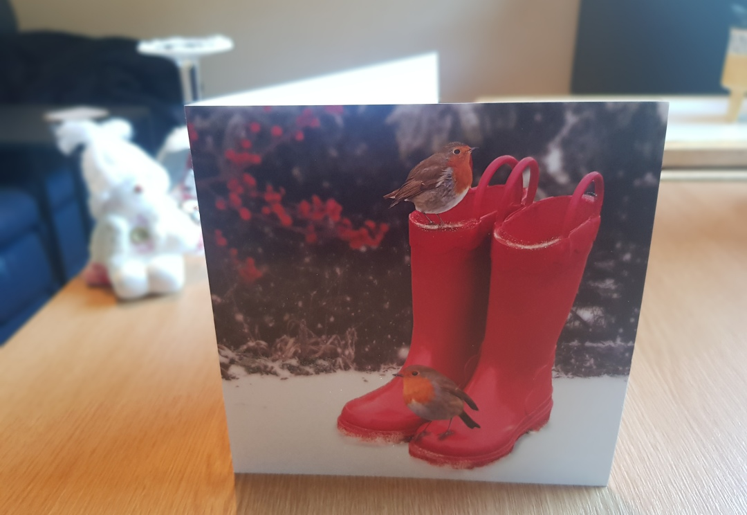 Robins on Wellies B